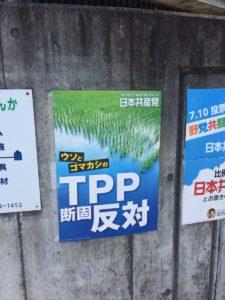 Michelle TPP